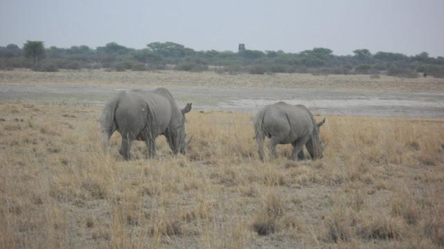 Rhinos at the Khama Rhino Sanctuary