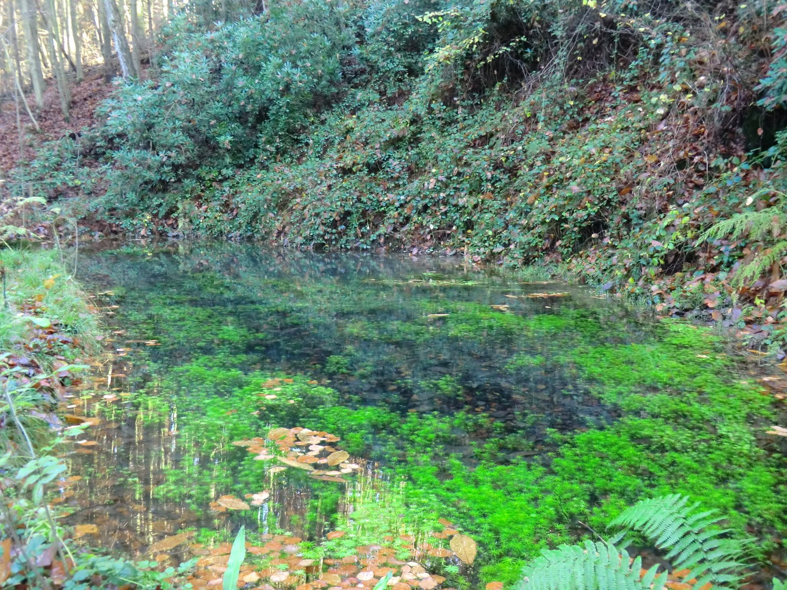CIMG6212 Pool of spring water in Burrs Wood