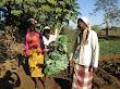 Sust: Geração Rendimento, Machamba Escolar, SLM, Chokwé, Jul 2016