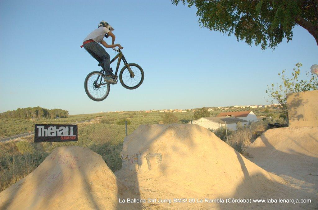 Ballena Dirt Jump BMX 2009 - BMX_09_0129.jpg