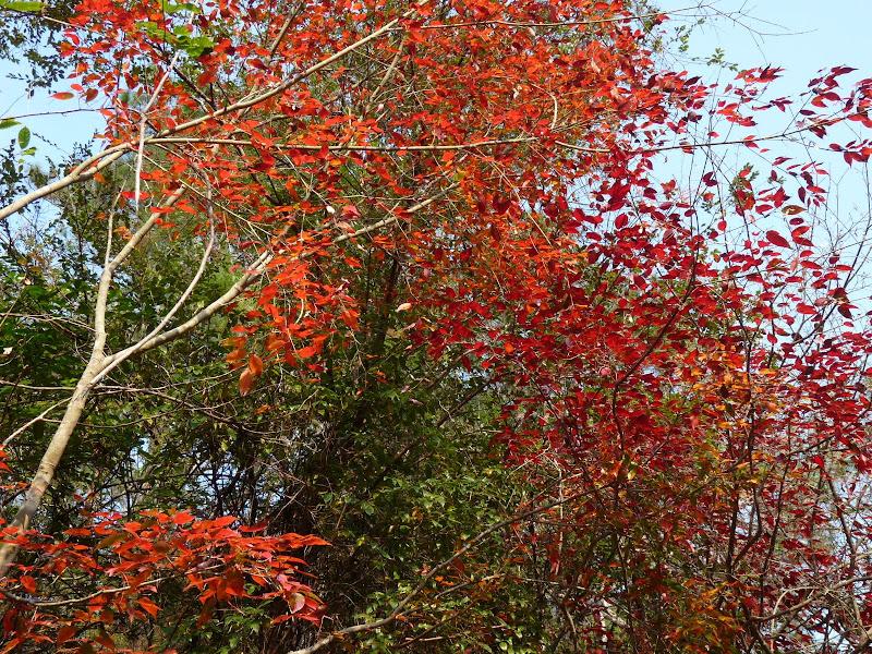 Chine .Fujian.Wuhi shan B - P1030386.JPG