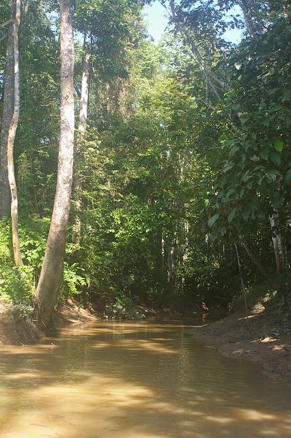Lot n°2, Sukau (Sabah), 15 août 2011. Photo : J.-M. Gayman