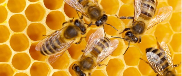 Small_bee-honeycomb