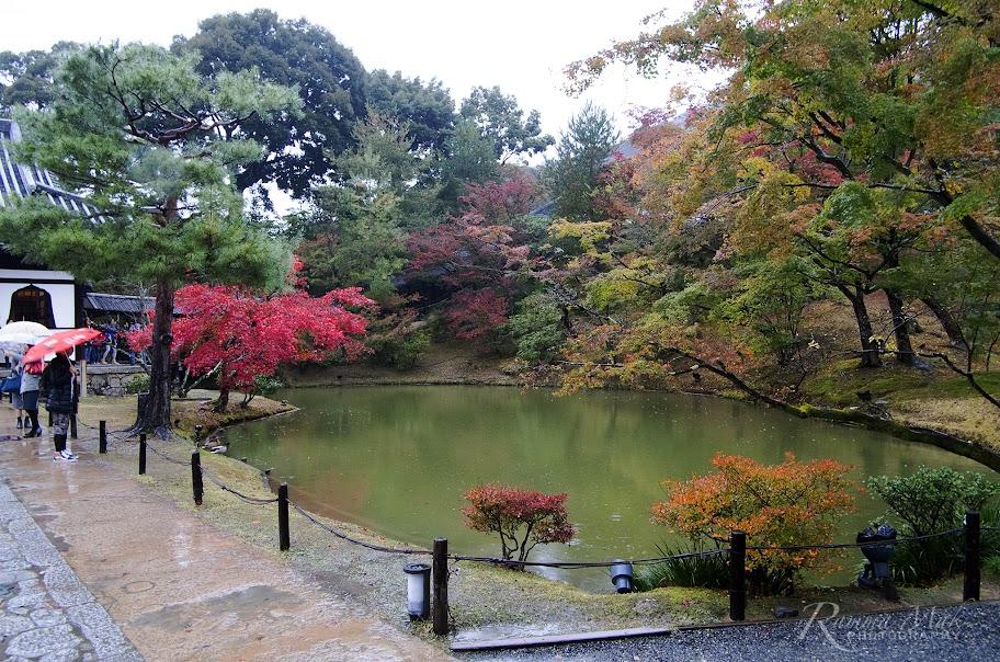 被紅葉圍繞的小池塘