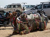 Camel transport - Jodhpur, Rajasthan