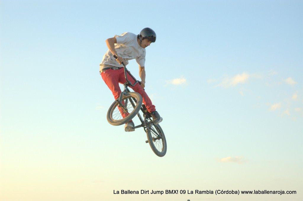Ballena Dirt Jump BMX 2009 - BMX_09_0139.jpg
