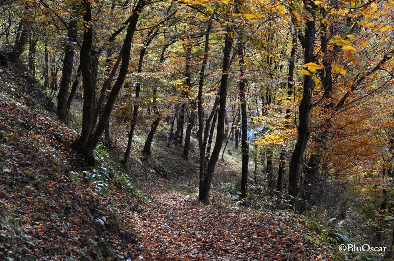 Sentiero natura S Vittore 18 11 201 N10