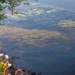 20140906_Fishing_Lysyn_030.jpg