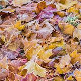 Иней на листьях