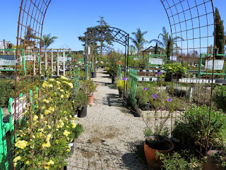 2015 Nursery Photos for website update 3-25-2015 2-59-58 AM 4000x3000