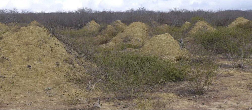 brazil-termite-mounds-5