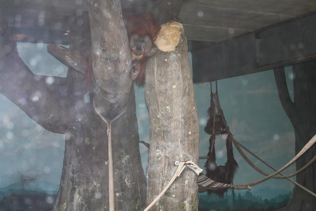 Zoo Snooze 2015 - IMG_7318.JPG