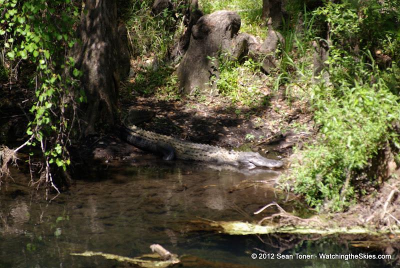04-04-12 Hillsborough River State Park - IMGP4413.JPG