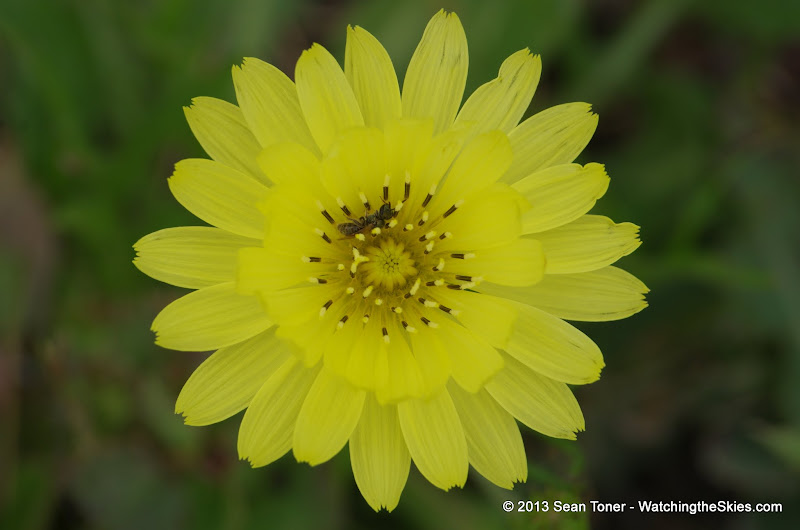 2013 Spring Flora & Fauna - IMGP6371.JPG