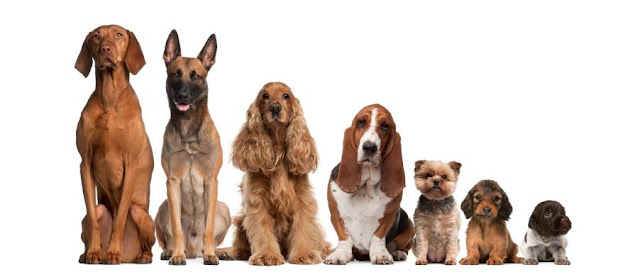 199 Dog Breeds to Adopt in Nigeria 3