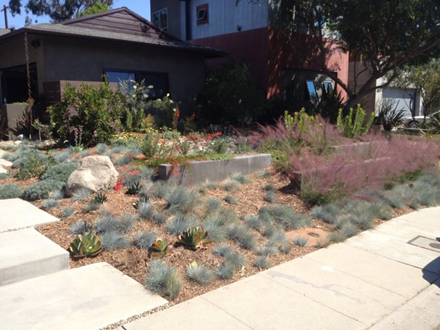 A drought-resistant xeriscape in Los Angeles by Stout Design Build. Photo: LandscapingNetwork.Com