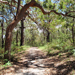 Warriwarri Lookout trail (235712)