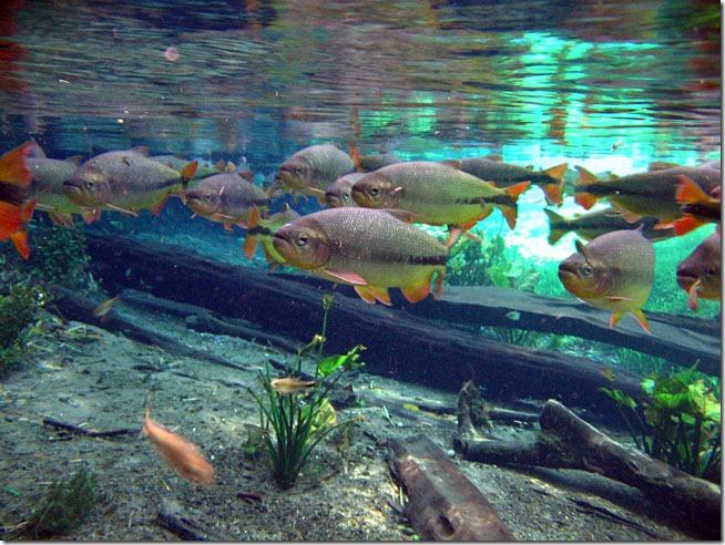 Aquario-natural-bonito-ms-3