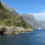 Cruise auf dem Milford Sound
