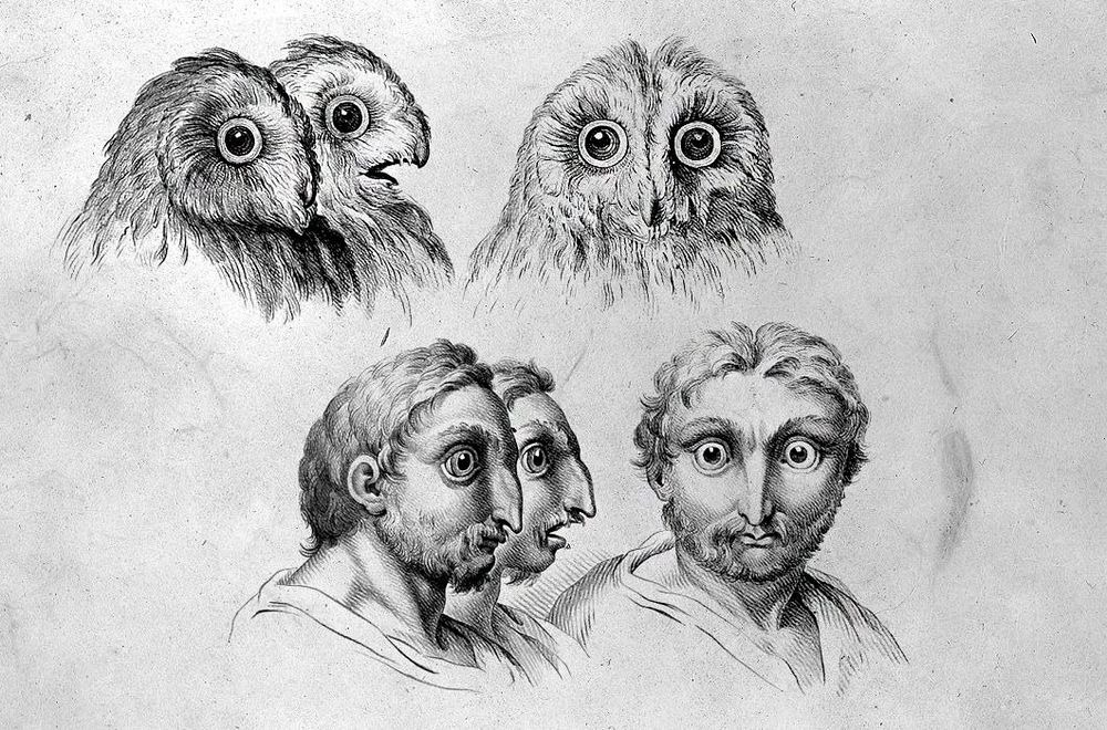 charles-le-brun-physiognomic-heads-14