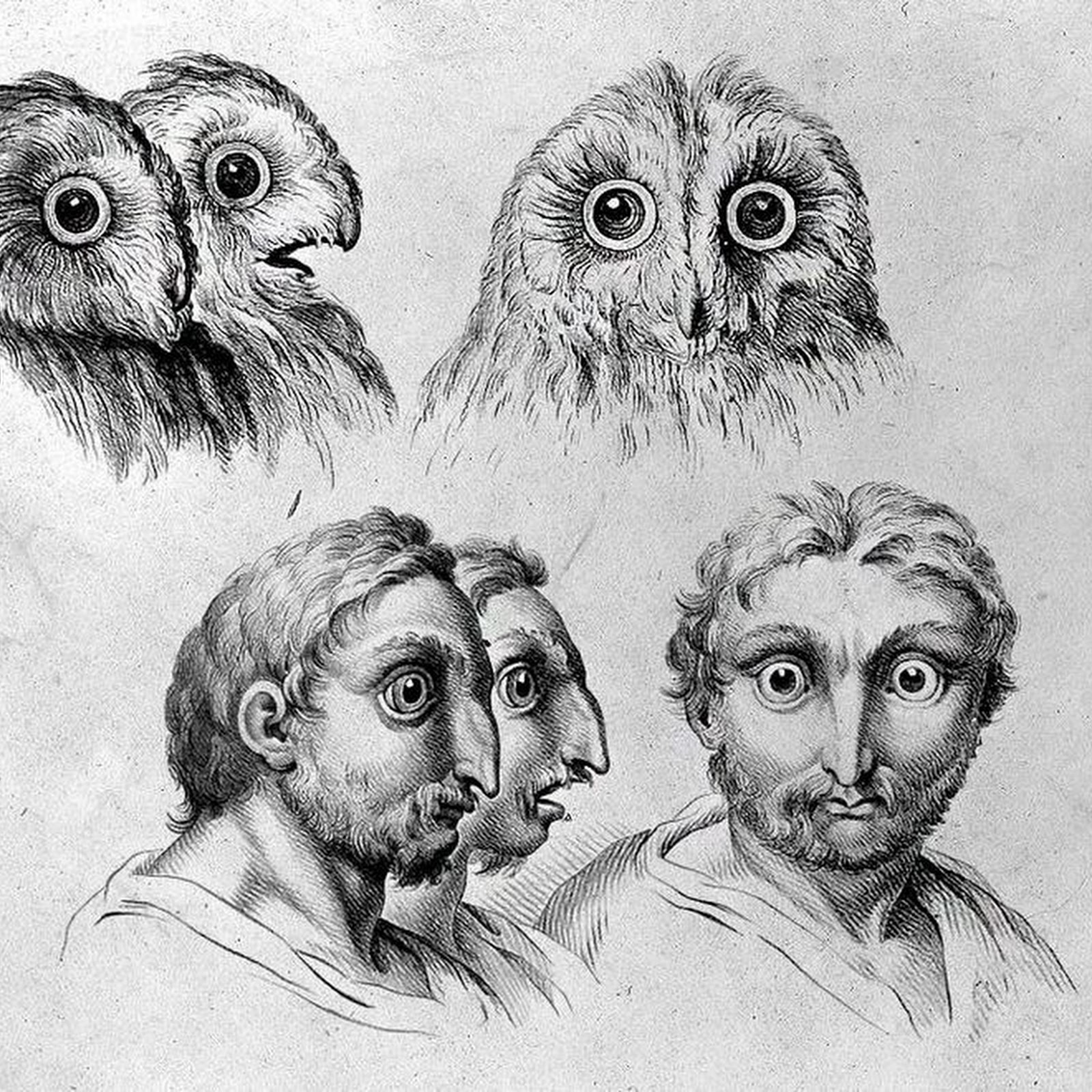 17th century sketches comparing human and animal faces amusing planet