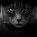 Aleksey Zhigar
