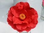 紅色 八重〜牡丹咲き 大輪