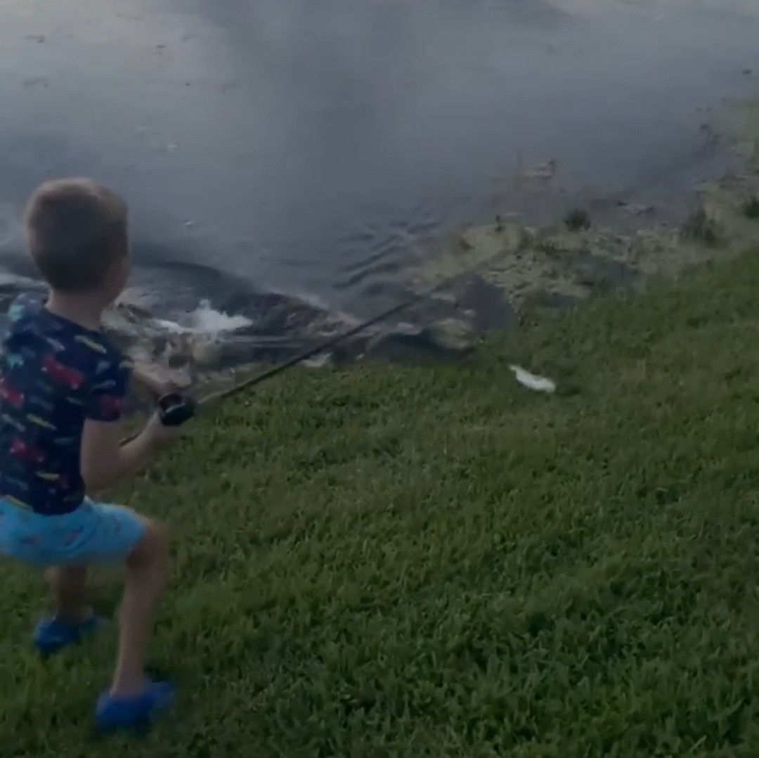 Terrifying moment alligator surges out of water towards young boy fishing (video)