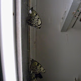Houston Museum of Natural Science - 116_2867.JPG