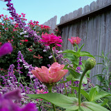 Gardening 2012 - 115_1670.JPG
