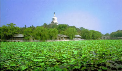 Lily pads in Beihai