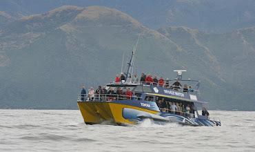 Photo: Whalewatching Boot