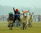 Bull Cart Sports Punjab.jpg