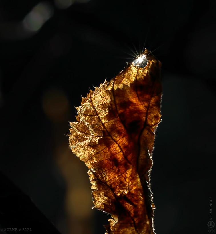 photo, лист, фото, leaf,