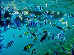 explore-pulau-pramuka-olp-15-16-06-2013-02