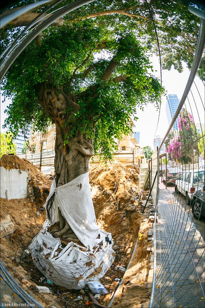 LookAtIsrael.com: Одно заботливое фото (israel  тель авив природа одно фото и интересно и полезно )