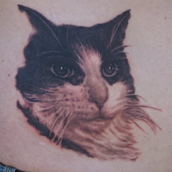 Craig's Cat