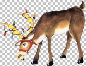 ChwrSwitz~ReindeerNorthPole.jpg