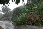 Badai Di Sertai Hujan Tumbangkan Tiang Listrik Dan Rusak Rumah Penduduk