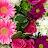 Tracey Ellis avatar image