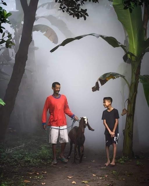 Kehidupan Di Kampung Indah Tanpa Gadget Pemandangan Desa Indonesia Pelihara Kambing
