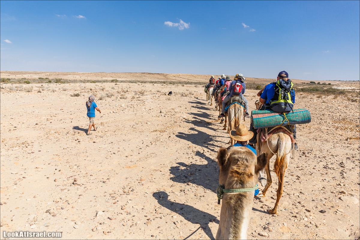 Быть бедуином