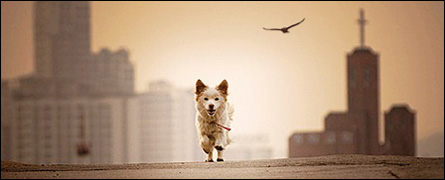 Free Dog, Free Bird