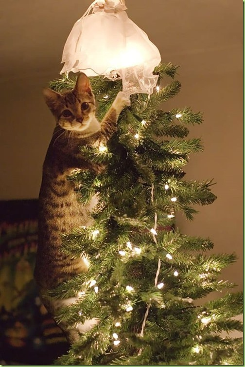 decorating-cats-destroying-trees-christmas-caught
