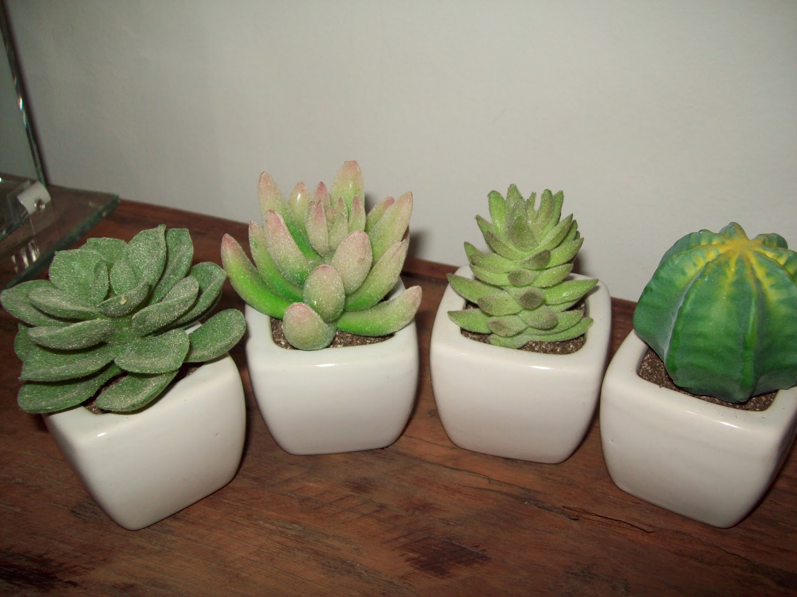 mini jardim cactos suculentas : mini jardim cactos suculentas:Para quem gosta de plantas dentro de casa, mas não consegue mantê
