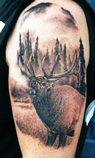 Elk #1