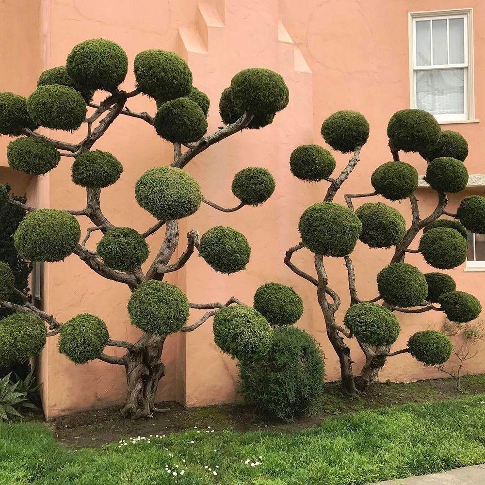 kelsey-mcclellan-topiary-2