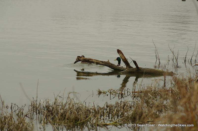 01-26-13 White Rock Lake - IMGP4356.JPG