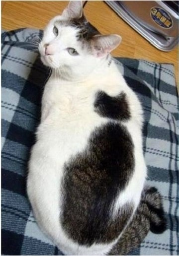 Cat-ception