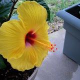 Gardening 2010 - 101_0734.JPG
